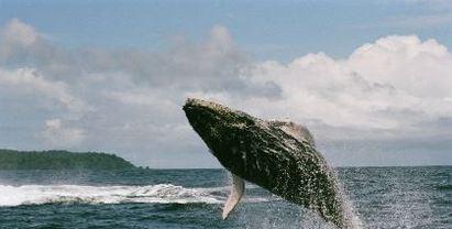walvissen costa rica reizen